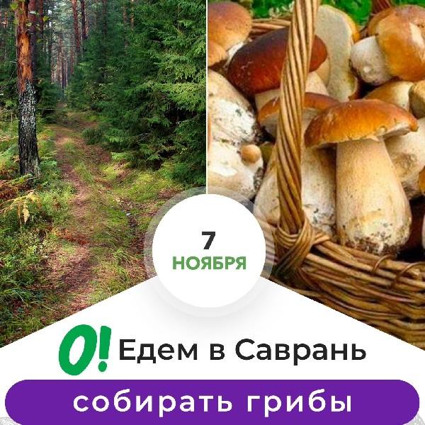 Едем в Саврань собирать грибы